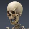 03 03 29 110 skeletonmayarigged th011 4