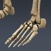 03 03 29 1 skeletonmayarigged th009 4