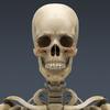 03 03 29 489 skeletonmayarigged th014 4
