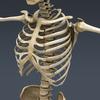 03 03 29 579 skeletonmayarigged th015 4