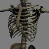 03 03 31 74 skeletonmayarigged th022 4