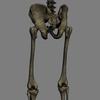 03 03 32 842 skeletonmayarigged th028 4