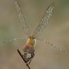 03 07 42 427 dragonfly 3 4