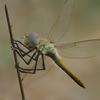 03 07 42 529 dragonfly 4 4