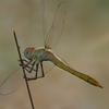 03 07 42 627 dragonfly 5 4