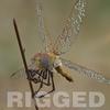03 07 42 76 dragonfly 0 4