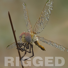Dragonfly Rigged 3D Model