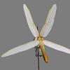 03 07 42 843 dragonfly 8 4