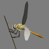 03 07 42 900 dragonfly 9 4