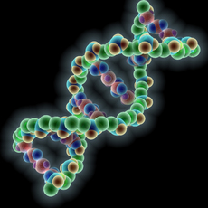 DNA molecule 3D Model