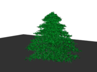 Free hi poly spruce tree 3D Model