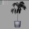 03 11 37 381 bamboo m 4
