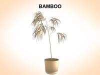 Bamboo 3D Model
