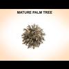 03 11 38 690 maturepalm 2 4