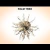 03 12 16 978 palmtreeyoung 2 4