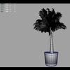 03 12 17 342 palmtreeyoung m 4