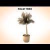 03 12 17 530 palmtreeyoung 1 4