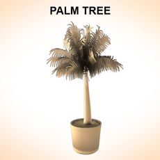 Palm Tree Young 3D Model