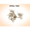 03 12 26 744 spiraltree 3 4