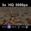 03 12 51 302 leaves on sand1 close 4