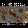 03 12 51 864 leaves on sand1 tex close 4
