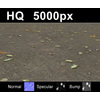 03 13 02 618 leaves on sand2 close col 4