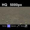03 13 03 224 leaves on sand2 col 4