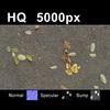 03 13 06 283 leaves on sand2 tex close 4