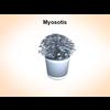 03 14 41 375 myosotis 1 4