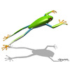 03 14 51 928 frog 08 4