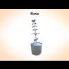03 14 53 612 rose 2 4