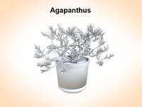 Agapanthus 3D Model