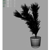 03 16 19 196 cactusgrass m 4