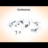 03 16 19 972 cortinarius 1 4