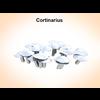 03 16 20 99 cortinarius 2 4