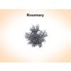 03 16 48 852 rosemary 2 4