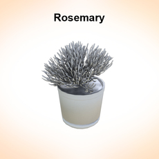 Rosemaryn 3D Model