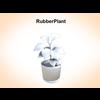 03 16 50 562 rubberplant 1 4