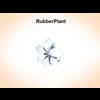03 16 50 817 rubberplant 3 4