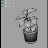 03 16 50 922 rubberplant m 4