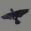 03 17 47 118 crow 04 4