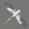 03 17 50 905 pelican 02 4
