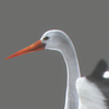 03 17 51 985 stork 06 4