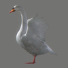 03 17 54 224 swan 01 4