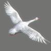 03 17 54 666 swan 03 4