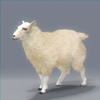 03 17 58 794 sheep 01 4