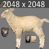 03 17 59 124 sheep04 4