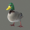 03 18 00 155 duck 03 4
