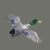 03 18 00 383 duck 04 4