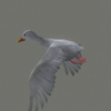 03 18 00 764 duck white 06 4